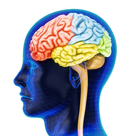 brain-41897929-web